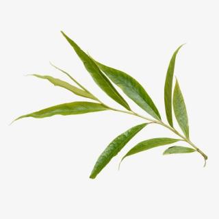 绿色植物叶子PNG透明图片素材