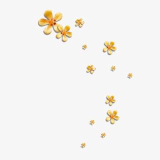 花瓣漂浮物