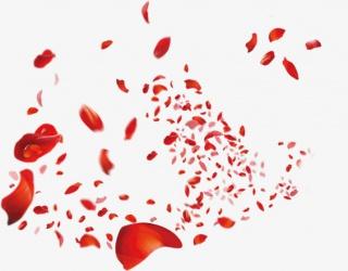 玫瑰花瓣漂浮素材