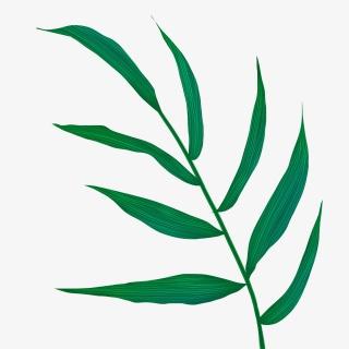 手绘叶子绿色植物素材