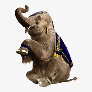 坐着的大象实物图