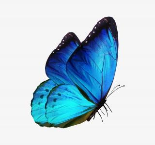 翩翩飞舞蓝色蝴蝶