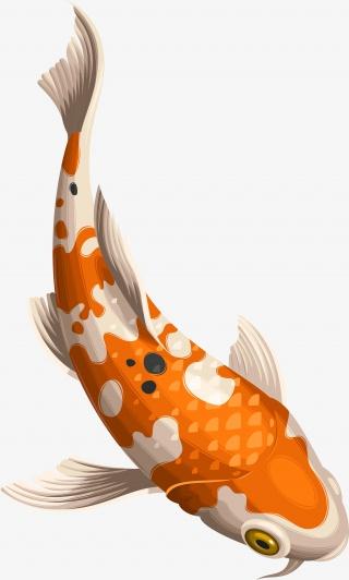 游动的鲤鱼素材图