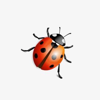七星瓢虫昆虫卡通