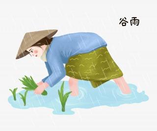 谷雨插秧的农民插画