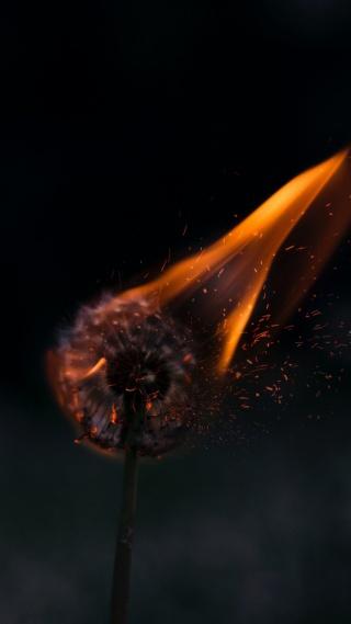暗黑系燃烧的蒲公英高清手机壁纸