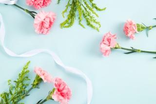 摄影图母亲节鲜花粉色康乃馨